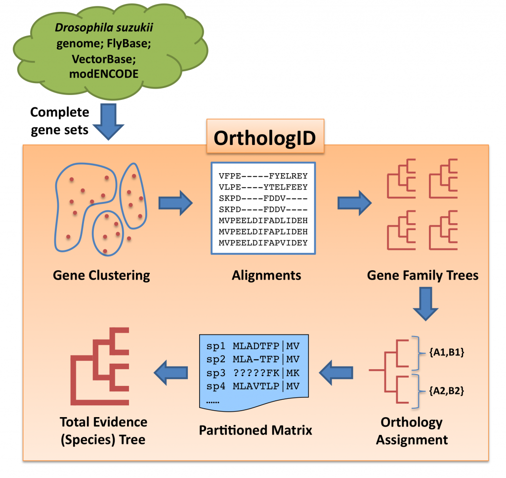 OrthologID Pipeline